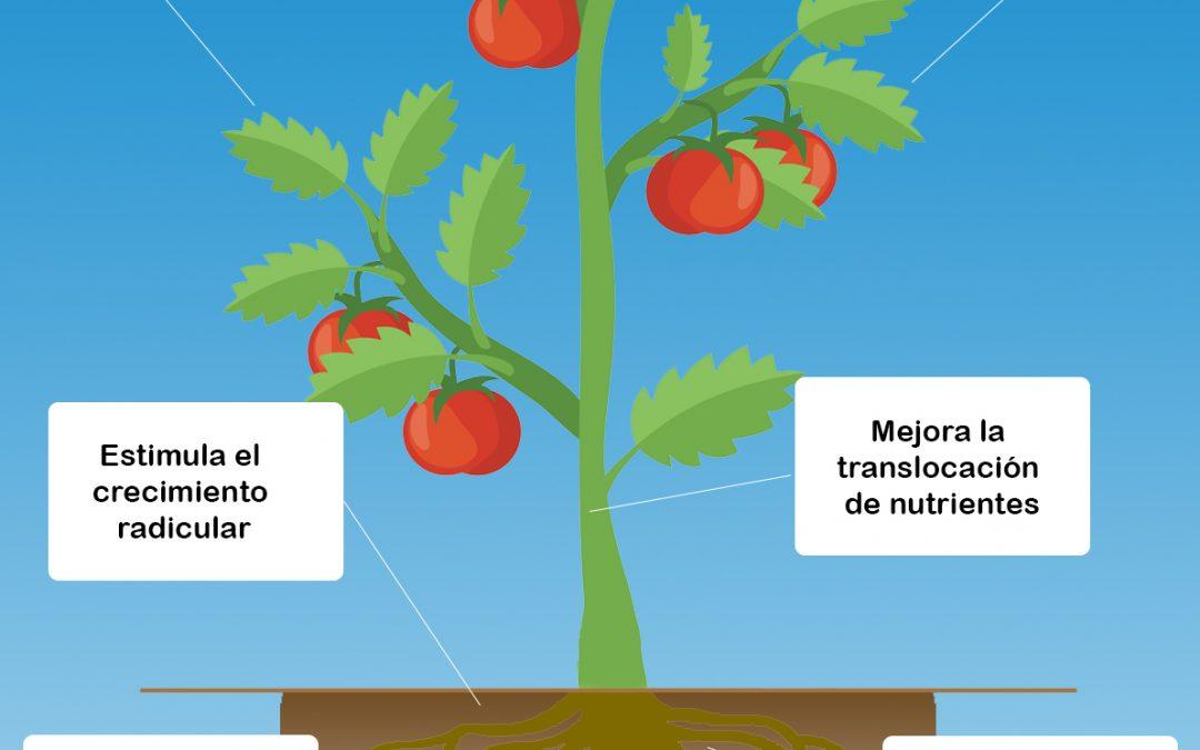 Beneficios de los fertilizantes orgánicos