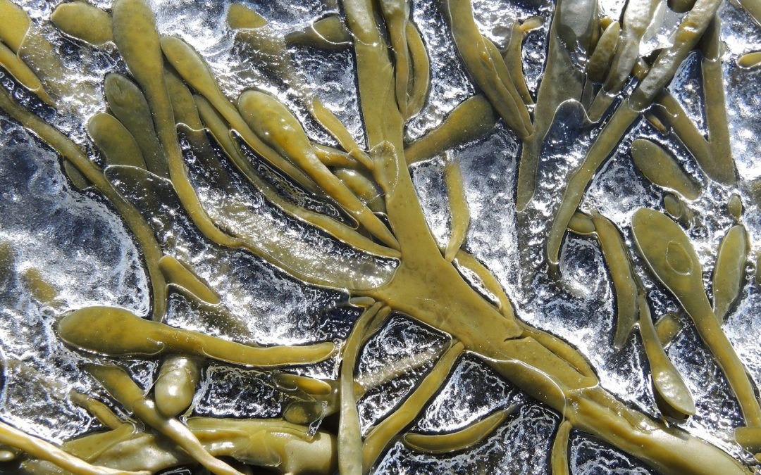 Seaweed Extract against Abiotic Stress